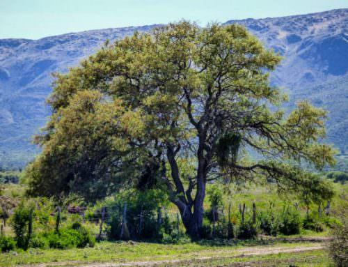 Ley Agroforestal: ¿cómo participan los ingenieros agrónomos y forestales?
