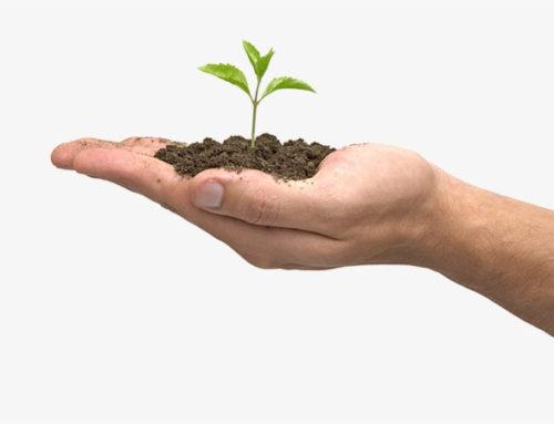 La importancia de la educación ambiental en la práctica y en los conceptos